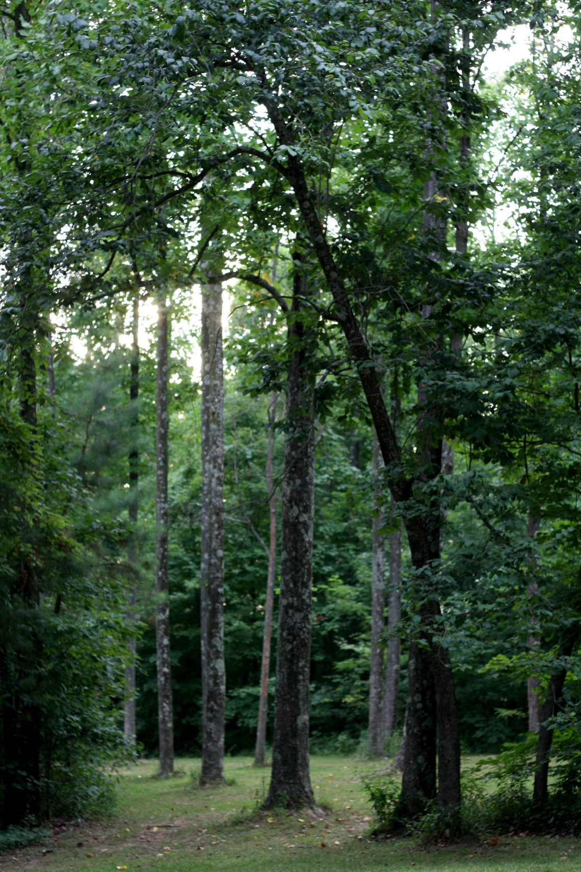 Jefferson Memorial Forest. Photo by Allison Wopata.
